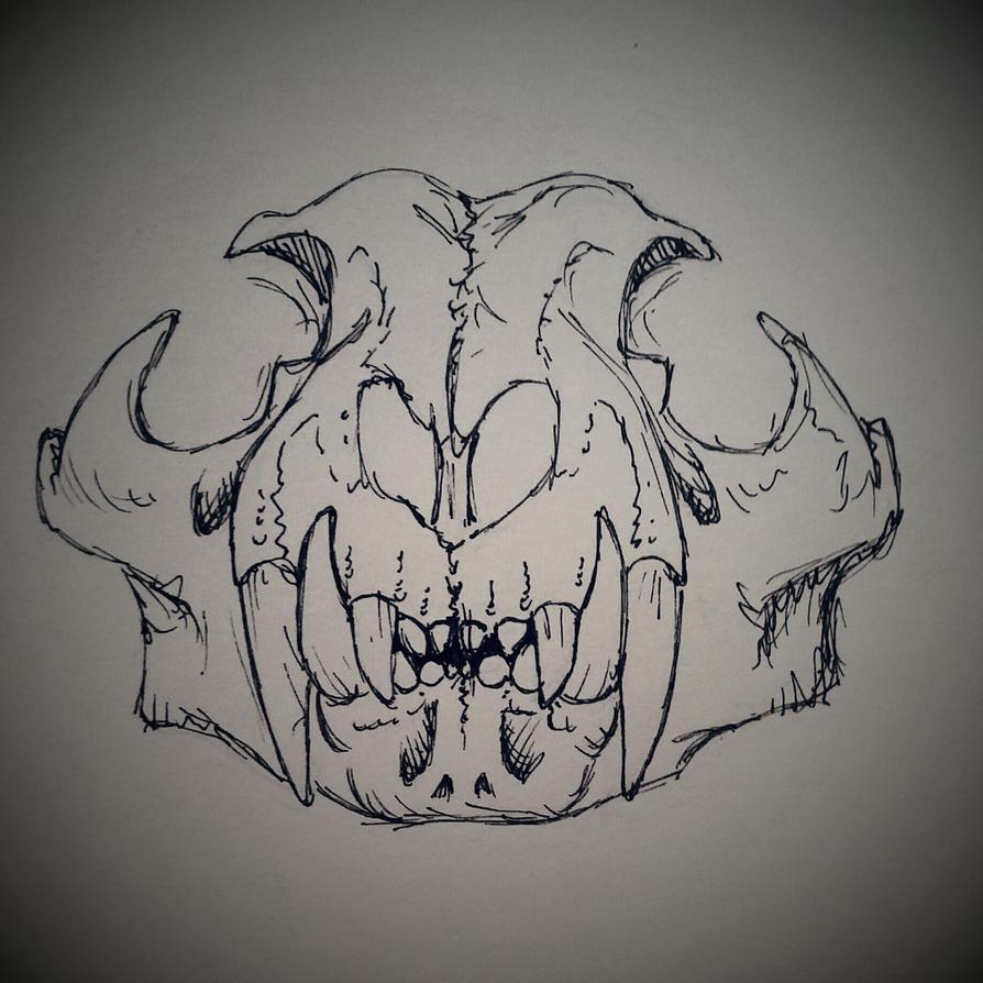 carnivore skull by JustADeer