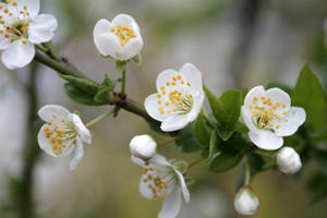 Spring 6 by AgentSaSu
