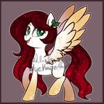Holly Pony  CLOSED