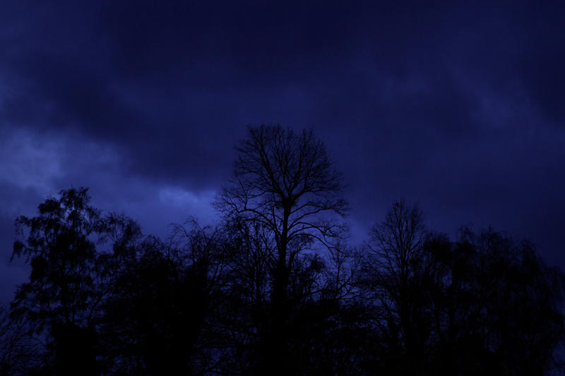 Bare Trees in Blue by piskieheart