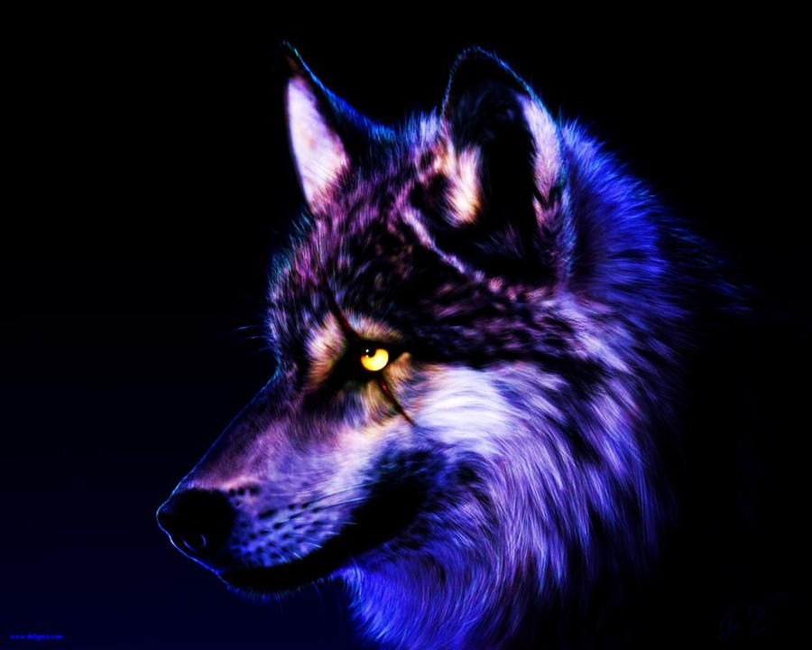 the gallery for gt cool wolf wallpaper