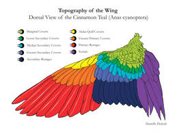 Wing Study