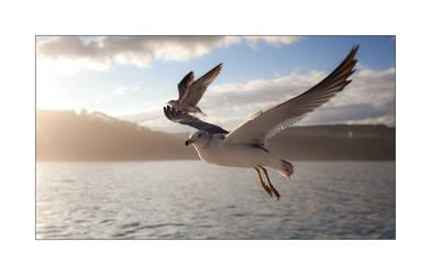 In Flight I by MrNudge