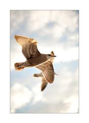 In Flight III by MrNudge
