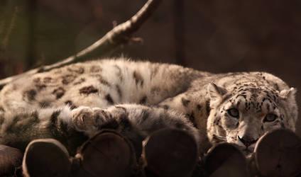 snow leopard II by MrNudge
