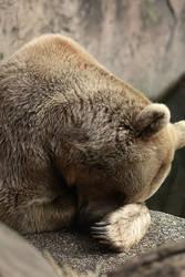 mr bear II by MrNudge