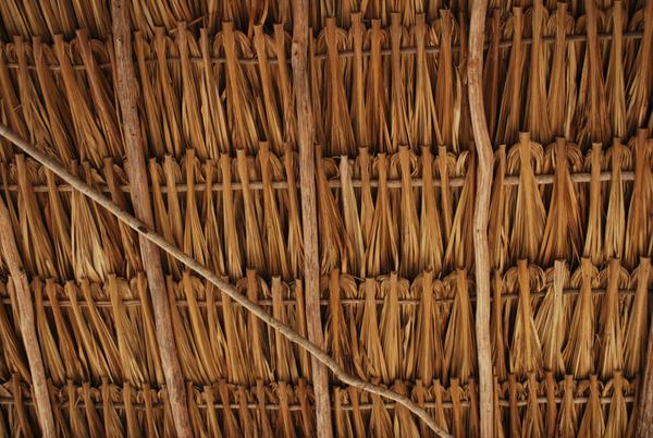 Palm roof by KatzBlackblade