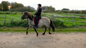 Riding Stock #2