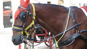 Horse Portrait #2