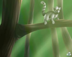 B-Day Lemur