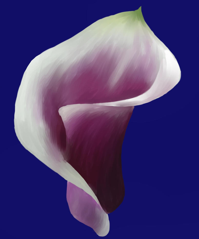 Calla Lily Painting by SnivvitySwooty on DeviantArt