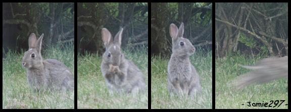 Bunny Medley by Jamie297