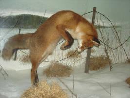 Fox by Flyg-stock
