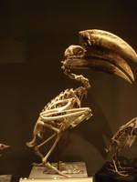 Bird skeleton-5 by Flyg-stock