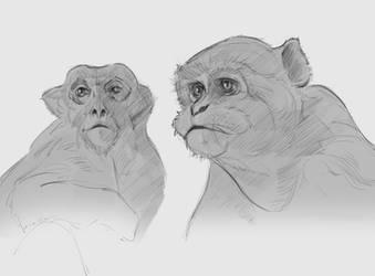 Rhesus monkeys (Twitch Stream)