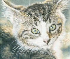Barnyard Kitten - Color Pencil Kit 1 by Carol-Moore