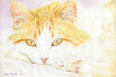 Orange and White Tabby OSWOA by Carol-Moore