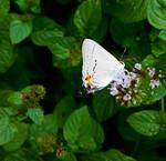 Stock - Butterfly 3