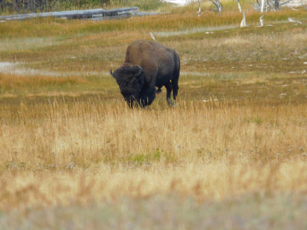Yellowstone stock -5 by Carol-Moore