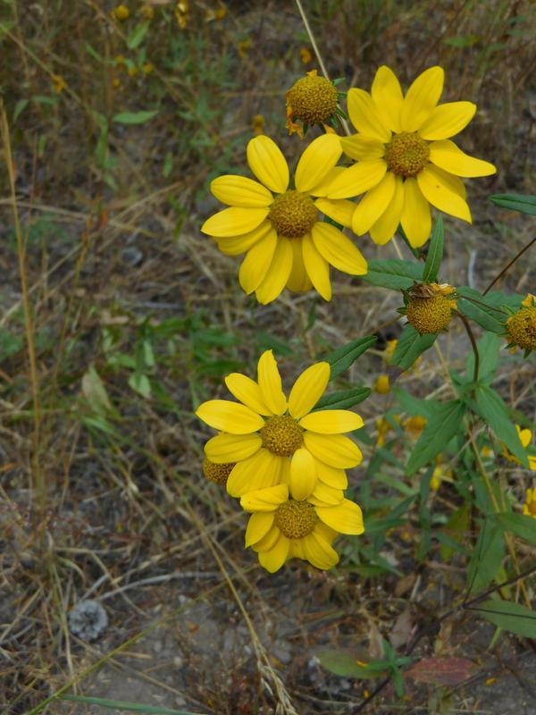 Grand Teton National Park - 1 by Carol-Moore