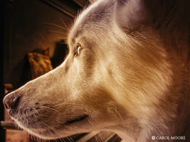 Kumori - Anticipation by Carol-Moore
