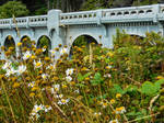 Ben Jones Bridge by Carol-Moore