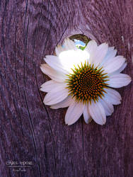 Flourishing by Carol-Moore