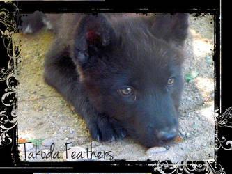 Takoda Feathers by moonwolf87