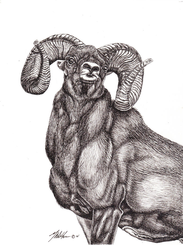 Bighorn Sheep by Wetherdog on DeviantArt