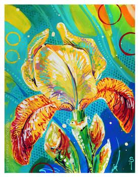 Yellow Bearded Iris