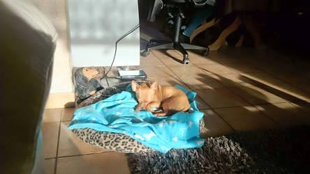 finley sleeps
