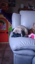 don't wake the pug!