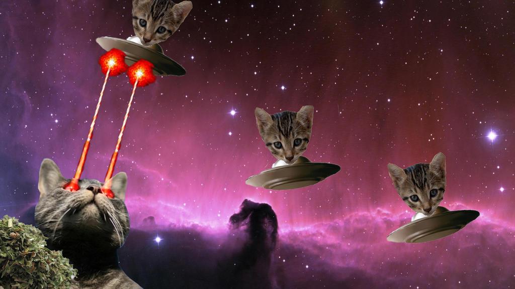 Cat Laser Eyes Cucumber