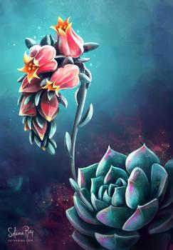 Echeverria in bloom