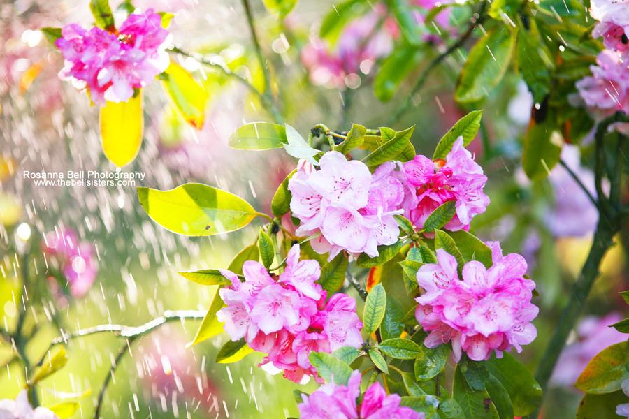 Sunrain - Day 123 by rosannabell