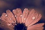 drops on flower.