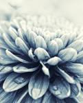 just flower.