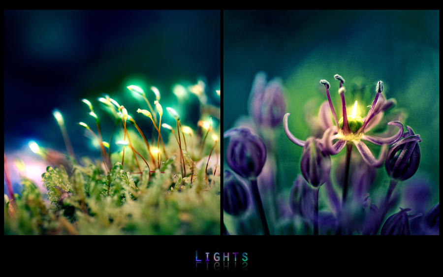 lights. 1280-800 by Altingfest