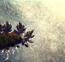 macro rain. by Altingfest