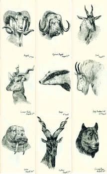 Various Animal Heads
