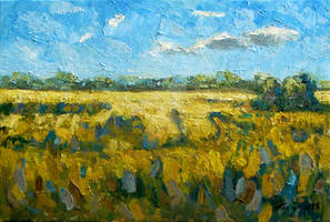 yellow fields with some clouds