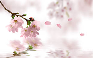 Sakura Romantic Wallpaper by dodozhang21