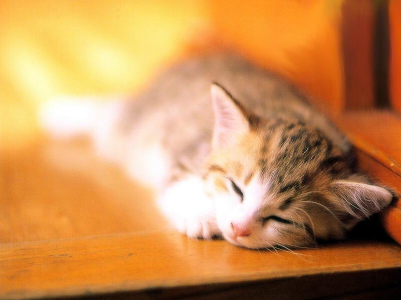 Sleepy_kitty_by_dodozhang21.jpg