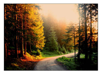 Beauty of the morning forest by tiposrichie