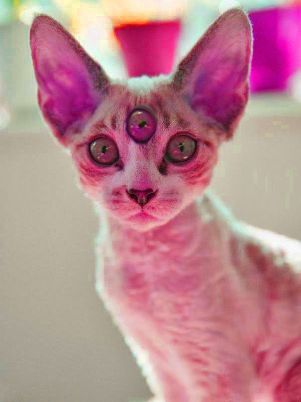 Spiritus Cattus by Daughter-Of-Hecate44
