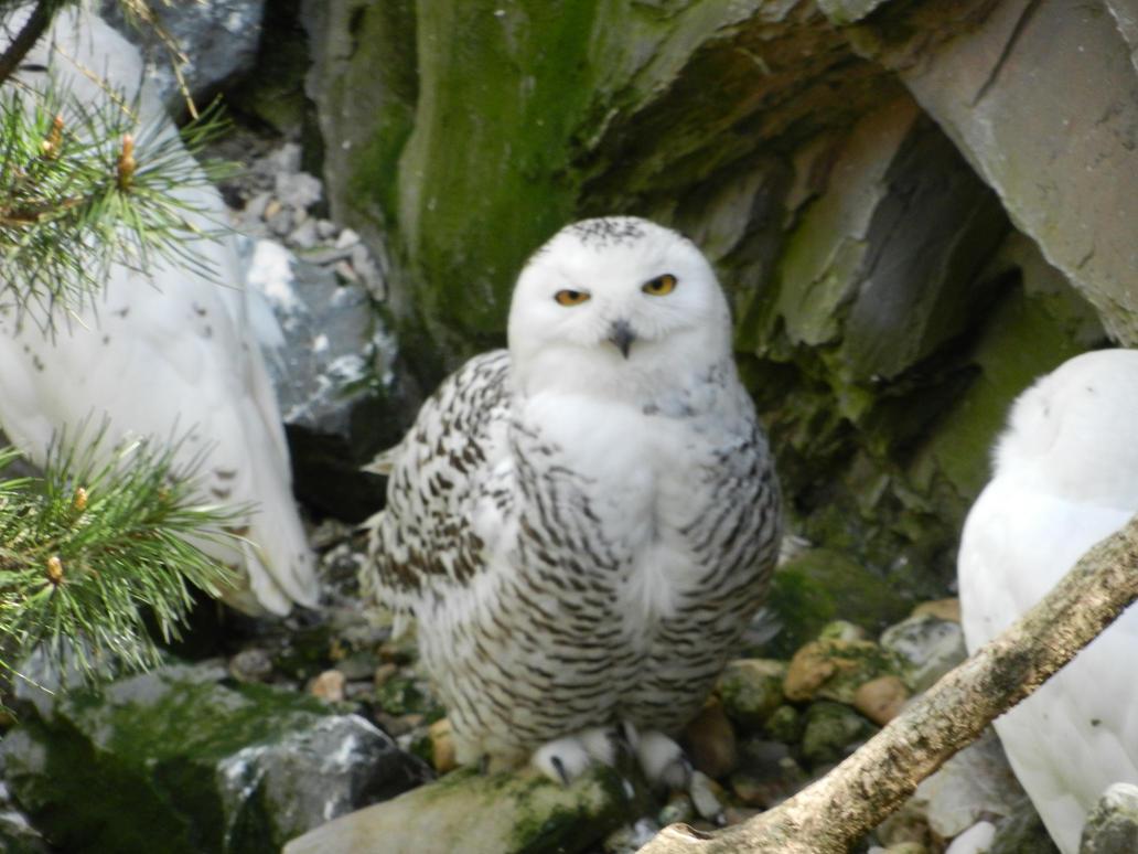 parkplatztreff owl bordell gelsenkirchen