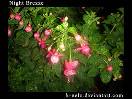 NIght Brezze by k-nelo