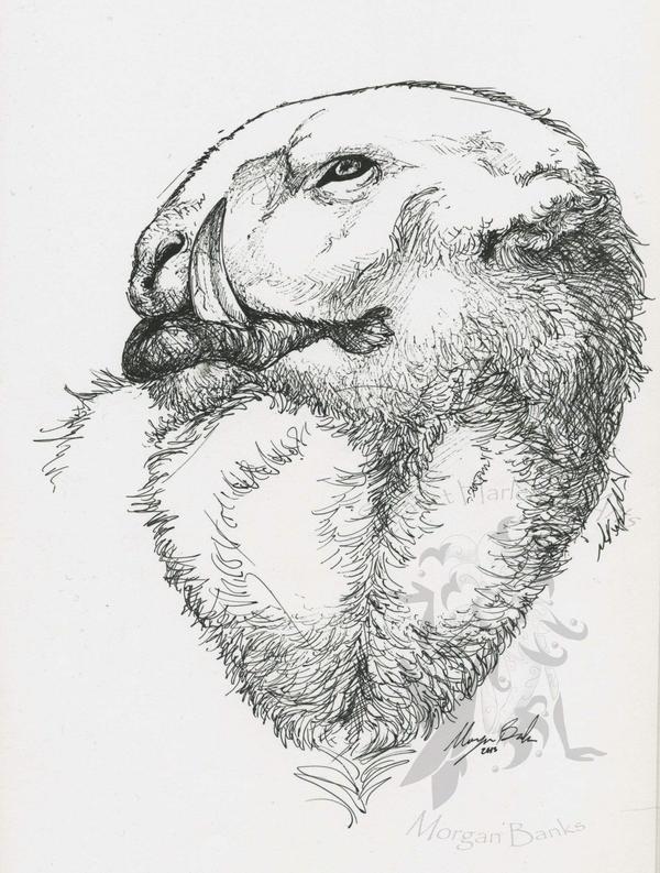Hup -coldland beasty- by Scarlet-Harlequin-N