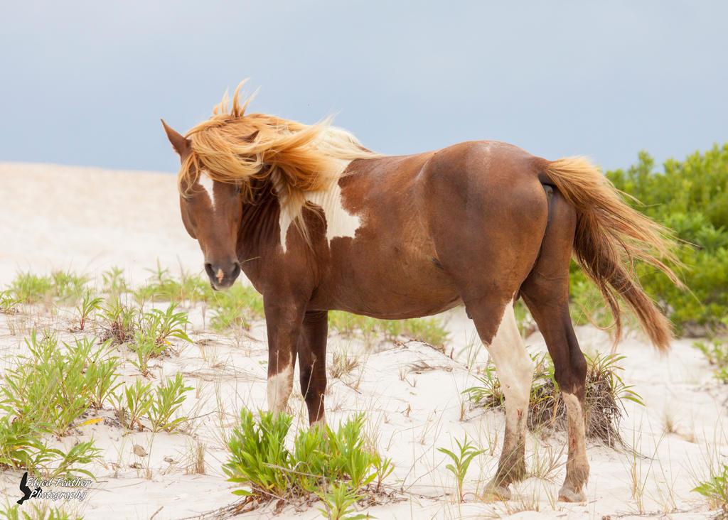 Wild Pony by EdgedFeather