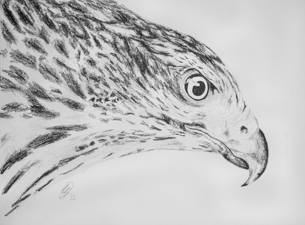 Cooper's Hawk by EdgedFeather
